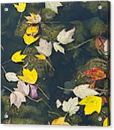 Fallen Leaves 2 Acrylic Print