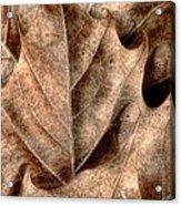Fallen Leaves I Acrylic Print