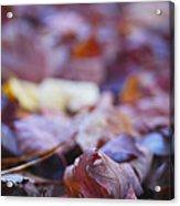 Fallen Leaves Road Acrylic Print by Irina Wardas