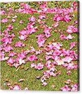 Fallen Rhododendron Acrylic Print