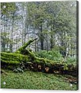 Fallen Stump Acrylic Print