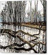 Fallen Tree Reflection Acrylic Print