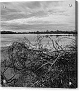 Fallen Trees At The Lake Acrylic Print