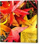 Falling Colors Fall Leaves Acrylic Print