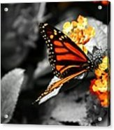 Falling Colors Acrylic Print