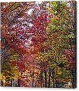 Falling For West Virginia Acrylic Print