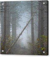 Falling Tree Acrylic Print