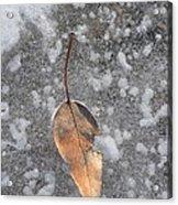 Fall's Fallen Meets Spring Sunshine Acrylic Print