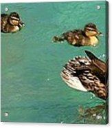 Family Flotilla 2 Acrylic Print