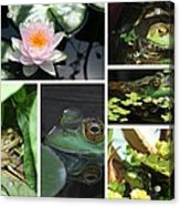 Family Of Frogs Collage Acrylic Print