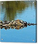 Family Of Turtles Acrylic Print
