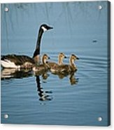 Family Outing Acrylic Print