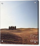 Famous Cypress Grove In Tuscany Acrylic Print