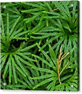 Fan Club Moss Foliage Acrylic Print