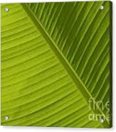 Fan Of Green 2 Acrylic Print
