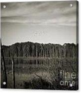 Fancher Davidge 3 Acrylic Print