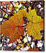 Fancy Fall Leaves Acrylic Print