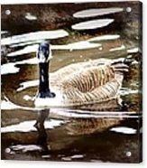 Fancy Goose Acrylic Print