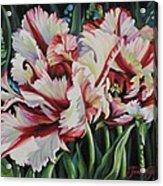 Fancy Parrot Tulips Acrylic Print
