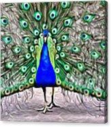 Fanning Peacock Acrylic Print