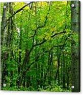 Fantastic Forest Acrylic Print