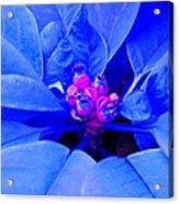 Fantasy Flower 11 Acrylic Print