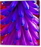 Fantasy Flower 5 Acrylic Print