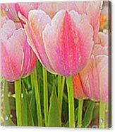 Fantasy In Pink - Tulips Acrylic Print