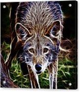 Fantasy Red Wolf Acrylic Print