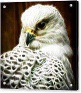Fantasy White Falcon Acrylic Print