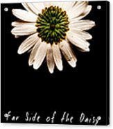 Far Side Of The Daisy Fractal Version Acrylic Print