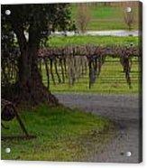 Farm And Vineyard Acrylic Print