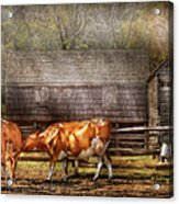 Farm - Cow - A Couple Of Cows Acrylic Print by Mike Savad