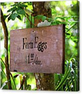 Farm Eggs Acrylic Print