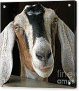 Farm Favorite Acrylic Print