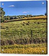 Farm Field Acrylic Print