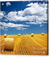 Farm Field With Hay Bales Acrylic Print by Elena Elisseeva