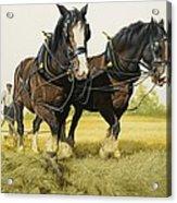 Farm Horses Acrylic Print