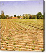Farm Landscape Acrylic Print