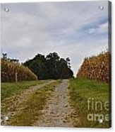 Farm Lane Acrylic Print