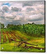 Farm - Organic Farming Acrylic Print