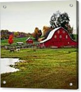 Farm Perfect Acrylic Print