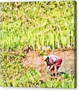 Farmer Acrylic Print