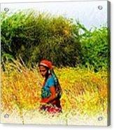Farmers Fields Harvest India Rajasthan 2a Acrylic Print