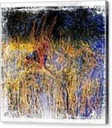 Farmers Fields Harvest India Rajasthan 6 Acrylic Print