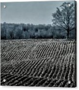 Farmfield Furrows Acrylic Print