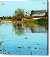 Farming Rice In California Acrylic Print