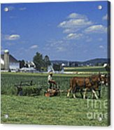 Farming The Old Order Way Acrylic Print