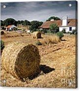 Farmland Acrylic Print by Carlos Caetano