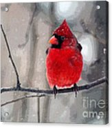 Fat Cardinal In The Snow Acrylic Print